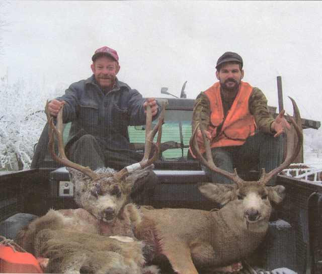 2 mule_deer_bucks