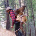 Packing the bull elk