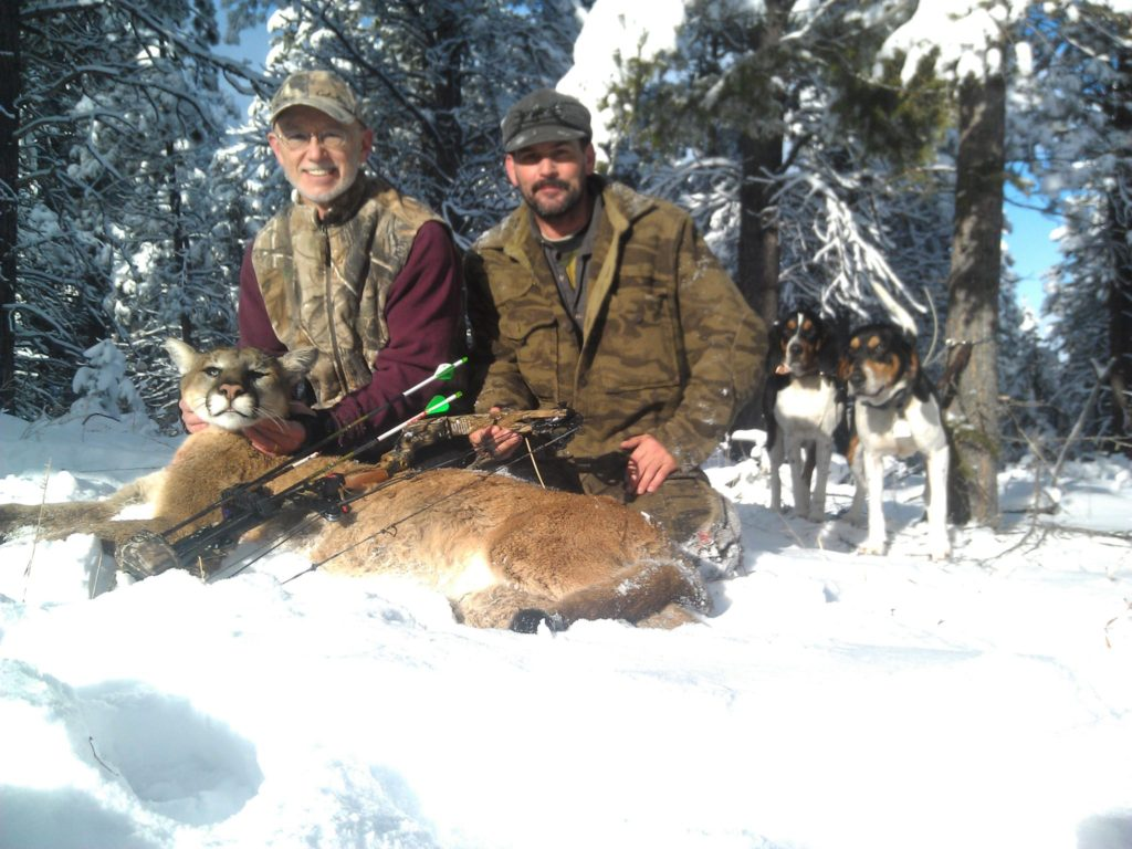 Archery Mountain Lion Hunting