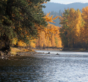 montana fly fishing trip
