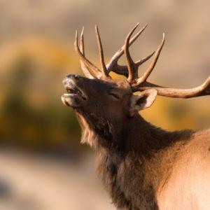 Montana Hunting Trips