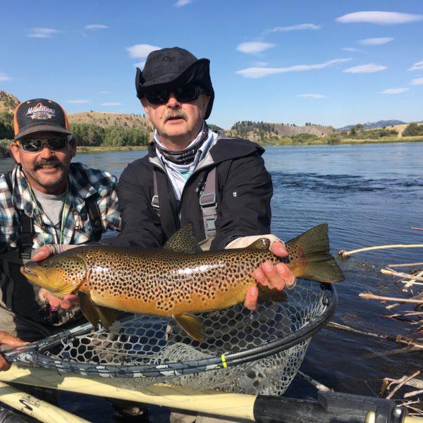 Missouri River Brown Trout